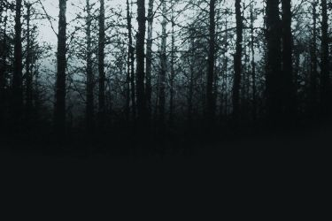 Park Ranger Stories – Scary Carrie's